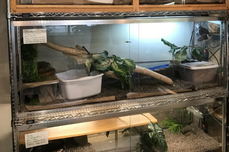 diy reptile enclosure