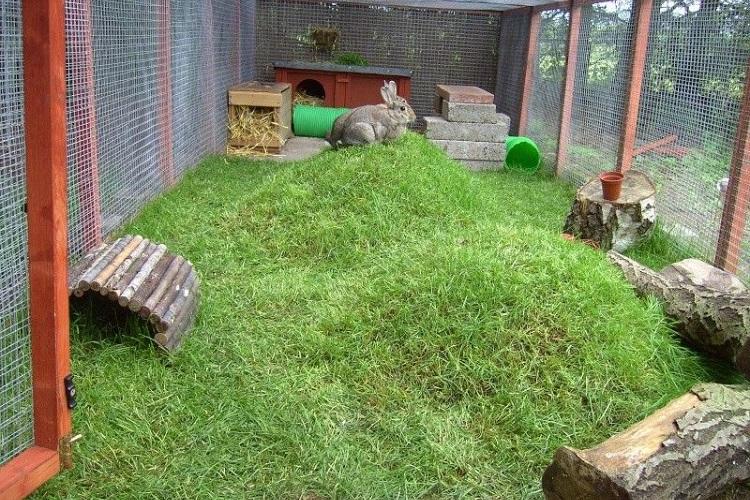 rabbit playground