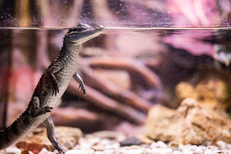 DIY Reptile Terrarium